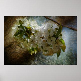 Cherry Blossom Wonder Poster