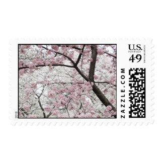 Cherry Blossoms 10 Postage Stamp