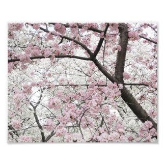 Cherry Blossoms 10 Print Art Photo