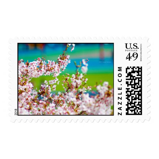 Cherry Blossoms 1 Postage Stamp