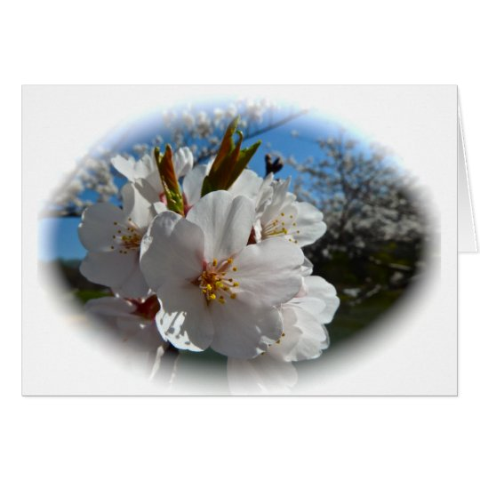 Cherry Blossoms 2 Card