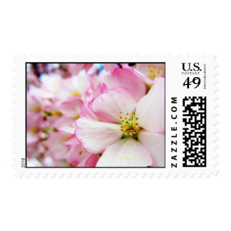 Cherry Blossoms 7 Postage Stamp