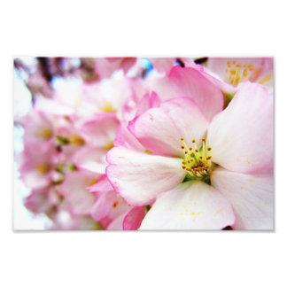 Cherry Blossoms 7 Print Photo Art