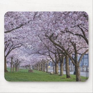 Cherry blossoms along Willamette river, USA Mouse Pad