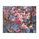 Cherry Blossoms and Bee Pink Spring Floral Canvas Print