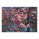 Cherry Blossoms and Bee Pink Spring Floral Greeting Card