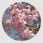 Cherry Blossoms and Bee Pink Spring Floral Classic Round Sticker