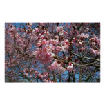 Cherry Blossoms and Bee Pink Spring Floral Poster