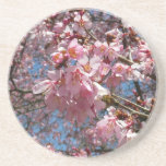 Cherry Blossoms and Bee Pink Spring Floral Sandstone Coaster