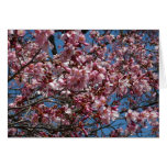 Cherry Blossoms and Blue Sky Spring Floral Card