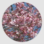 Cherry Blossoms and Blue Sky Spring Floral Classic Round Sticker