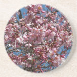Cherry Blossoms and Blue Sky Spring Floral Coaster
