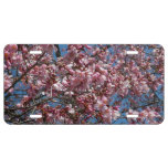 Cherry Blossoms and Blue Sky Spring Floral License Plate