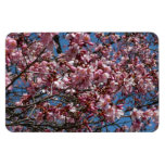 Cherry Blossoms and Blue Sky Spring Floral Magnet