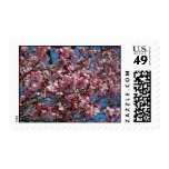 Cherry Blossoms and Blue Sky Spring Floral Postage