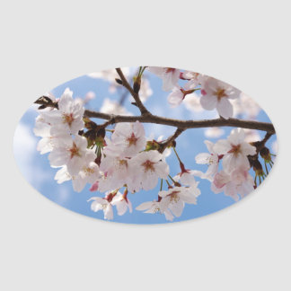 Cherry blossoms and light-blue sky oval sticker