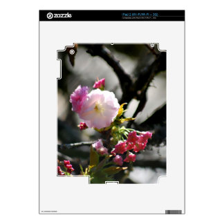 Cherry Blossoms and meaning iPad 2 Decal