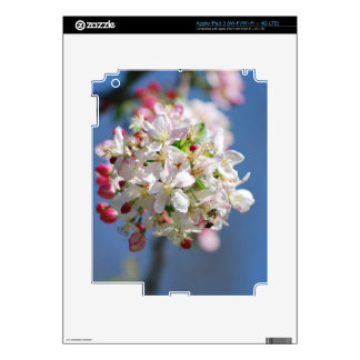 Cherry Blossoms and meaning iPad 3 Decals