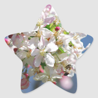 Cherry Blossoms and meaning Star Sticker