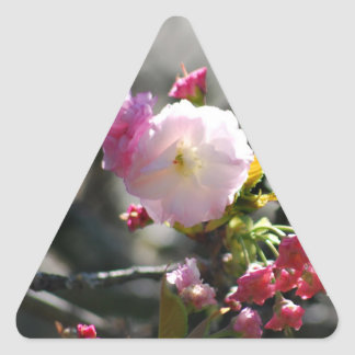 Cherry Blossoms and meaning Triangle Sticker