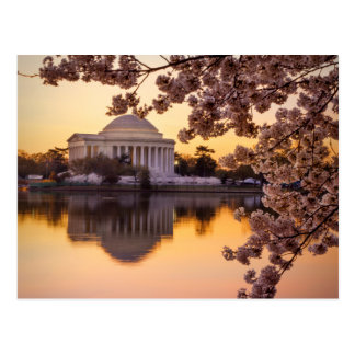 Cherry Blossoms And The Jefferson Memorial Postcard