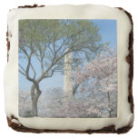 Cherry Blossoms and the Washington Monument Chocolate Brownie