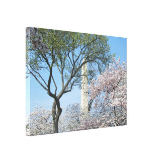 Cherry Blossoms and the Washington Monument in DC Canvas Print