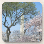 Cherry Blossoms and the Washington Monument in DC Drink Coaster