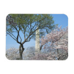 Cherry Blossoms and the Washington Monument in DC Magnet