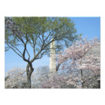 Cherry Blossoms and the Washington Monument in DC Photo Print