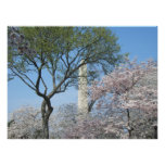 Cherry Blossoms and the Washington Monument in DC Poster