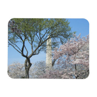 Cherry Blossoms and the Washington Monument in DC Rectangular Photo Magnet