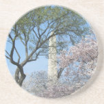 Cherry Blossoms and the Washington Monument in DC Sandstone Coaster