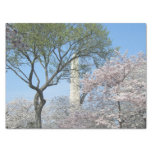 Cherry Blossoms and the Washington Monument in DC Tissue Paper