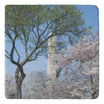 Cherry Blossoms and the Washington Monument in DC Trivet