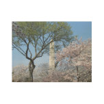 Cherry Blossoms and the Washington Monument in DC Wood Poster