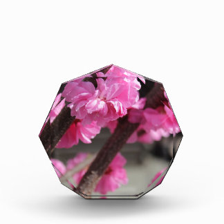 Cherry Blossoms Award