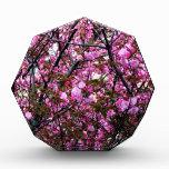 Cherry Blossoms Awards