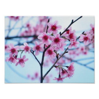 Cherry Blossoms - B Poster