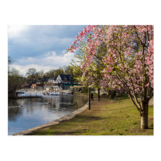 Cherry Blossoms, Boathouse Row, Philadelphia Postcard