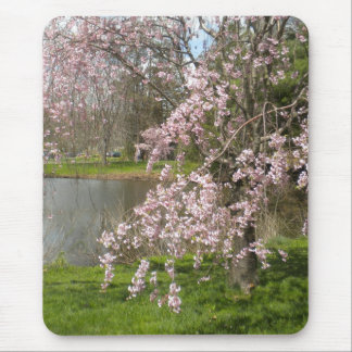 Cherry Blossoms By The Water Mouse Pad