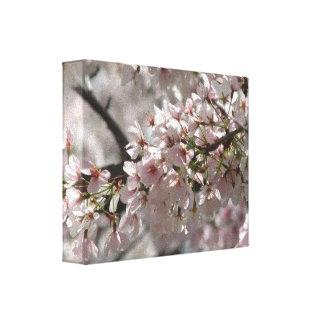 Cherry Blossoms Canvas