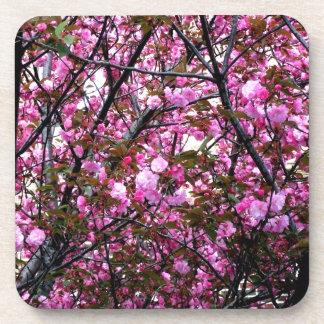 Cherry Blossoms Coaster