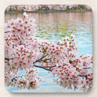 Cherry Blossoms Coasters