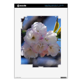Cherry blossoms decals for iPad 3