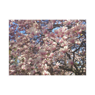 Cherry Blossoms Everywhere Canvas Print