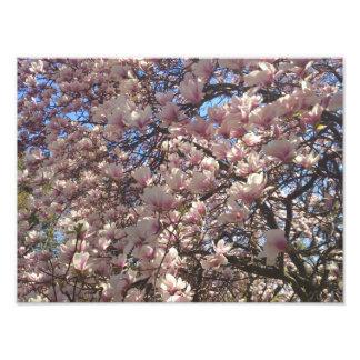 Cherry Blossoms Everywhere Art Photo
