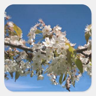 Cherry blossoms floral spring flower photo sticker