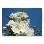 Cherry Blossoms Greeting Cards Blue Sky Spring