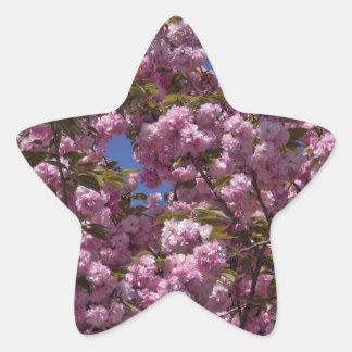 Cherry Blossoms in Bloom Star Sticker